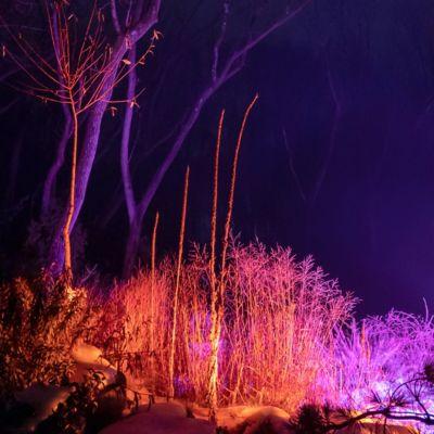 Color Changing Flood Lights, Set of 2