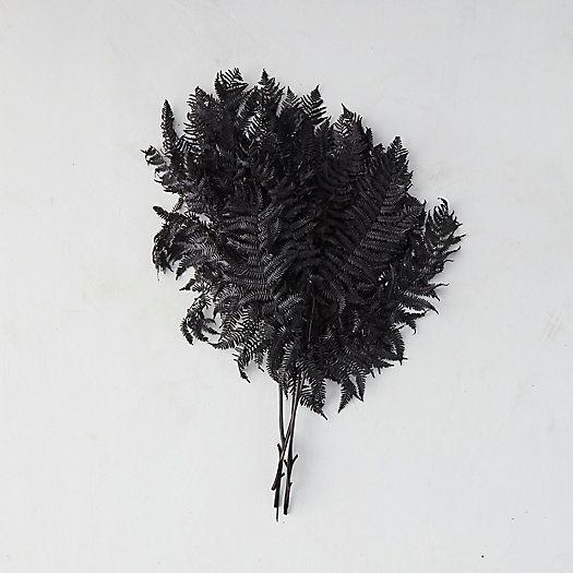 View larger image of Preserved Bracken Fern Bunch