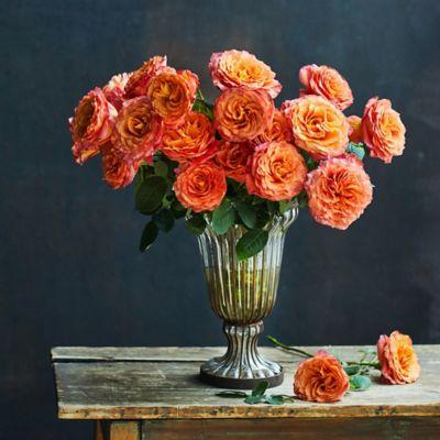 Fresh Free Spirit Roses Bunch, 2 Dozen