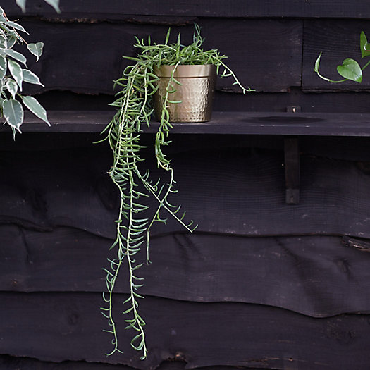 View larger image of String of Fish Hooks Plant, Metal Pot
