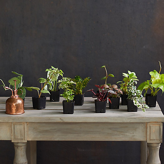 View larger image of Tropical Plants, Set of 12