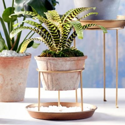 Shop the Look: An Elevated Indoor Garden