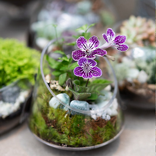 View larger image of Date Night Terrariums