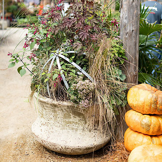 View larger image of Outdoor Fall Containers