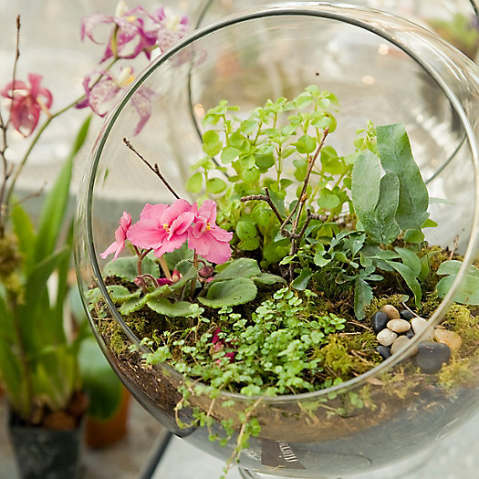 View larger image of Early Spring Terrariums