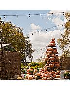Autumn Bounty Festival