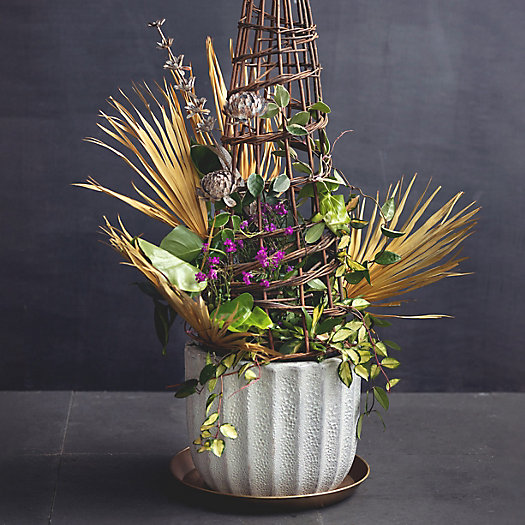 View larger image of Shop the Look: Garden Structure Container Planting, Tropical + Cool