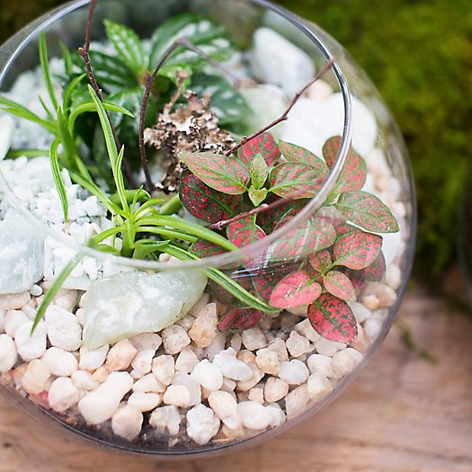 View larger image of Living Gift Terrariums, 11am