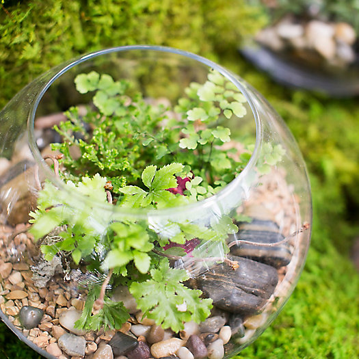 View larger image of Happy Hour Terrariums