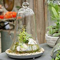 Under Glass: Creating a Specimen Cloche