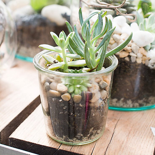 View larger image of Little Sprouts Back to School Terrariums