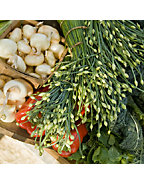 Local Fresh Produce Farmer's Market Pop-up