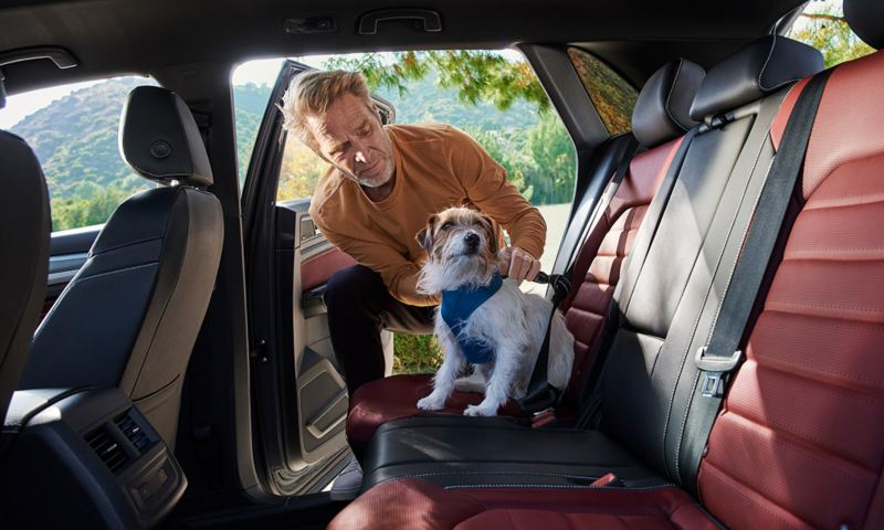 A man straps his dog in the rear row of an Atlas Cross Sport.